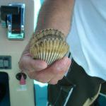 Scallop, We do not keep these!