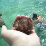 Sea Urchin , we do not keep these!