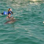 Snorkeling with Dolphins