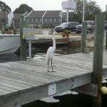 Our Dock buddy =)