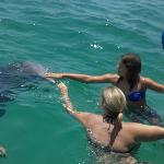 Victoria and Danielle's upclose dolphin encounter